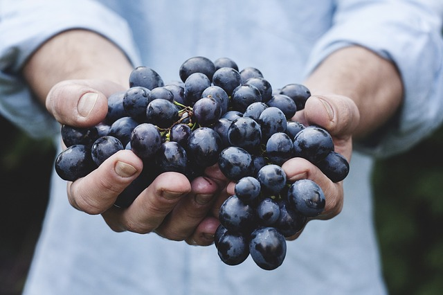 vegetarian restaurant salerno
